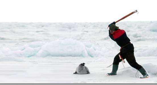 [Image: seal%20clubber.jpg]
